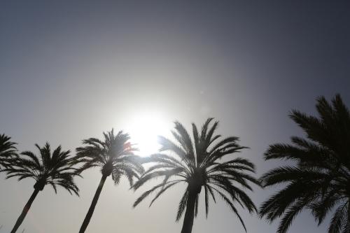 summer-sun-blue-sky-palm